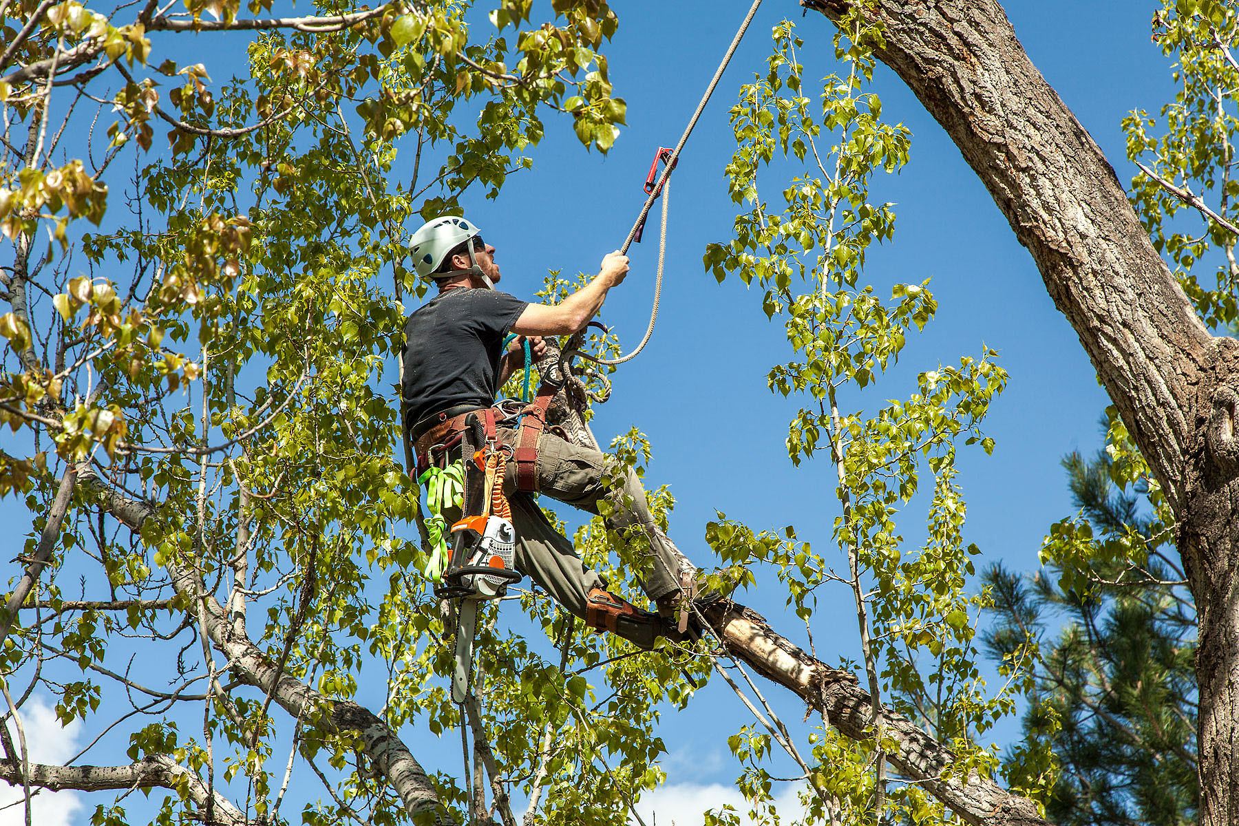 Most Common Services That You Can Get From a Tree Service